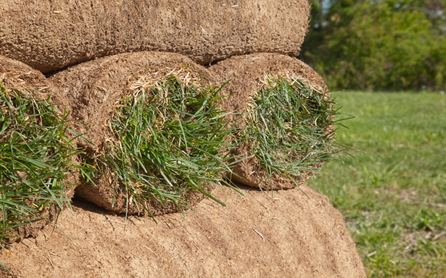 This sod is ready to be transplanted and beautify someone's yard. Focus is on foreground.